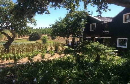 Aaldering Vineyard